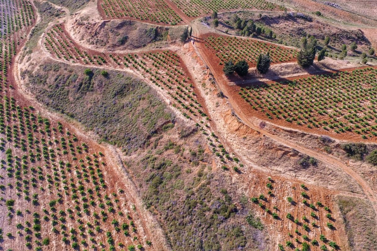 West Bekaa Vineyards