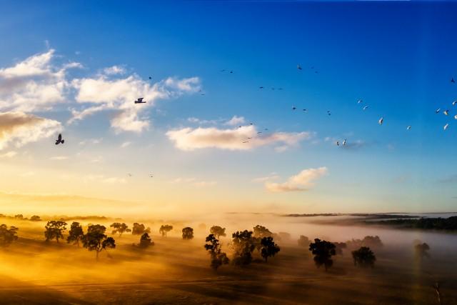 Foggy morning, Australia, WA