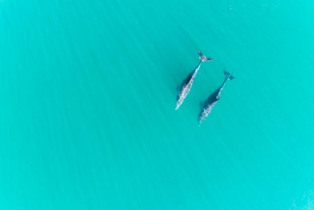 Dolphin Buddies V2