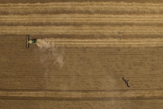 Harvest Hawk