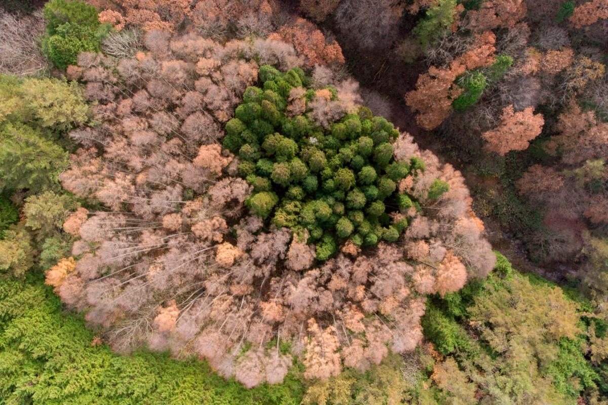 TREE COLORS IN JAPAN
