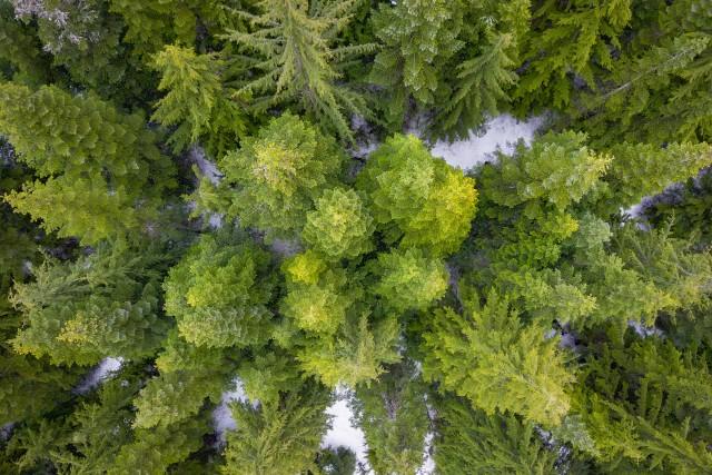 Tree Fractals