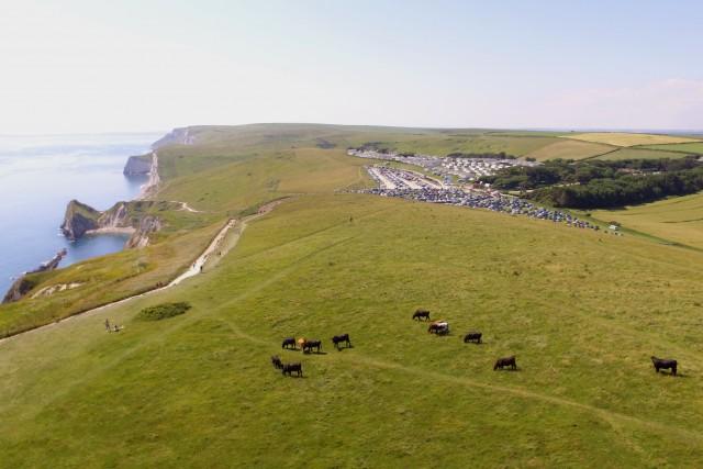 Lulworth coast line & cows, Dorset