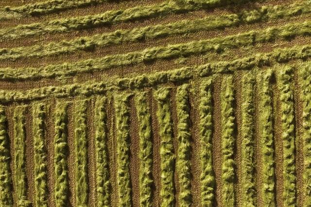 Doux comme les blés – Aveyron : Terre de contrastes
