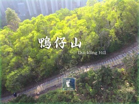 Duckling Hill, Tseung Kwan O, Kowloon, Hong Kong