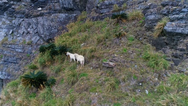Goats are in the valley