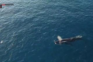 Noosa National Park,Whale Migration,HellsGate,QLD Australia.