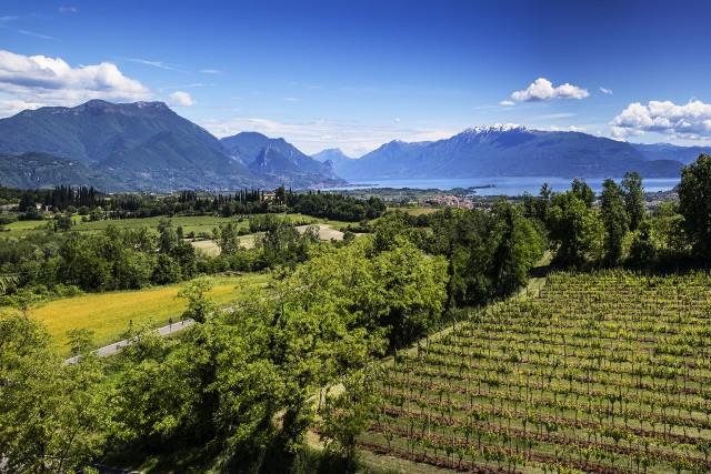 vineyards around the Lake Garda
