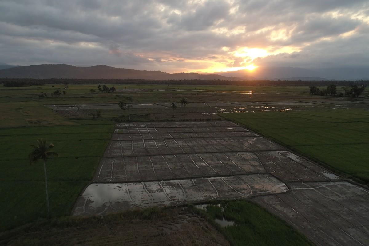 Sunset at Baler Rice Fields