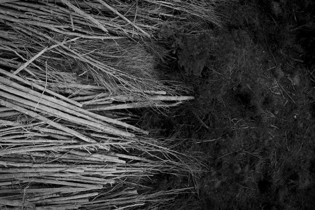 Tree Cementery