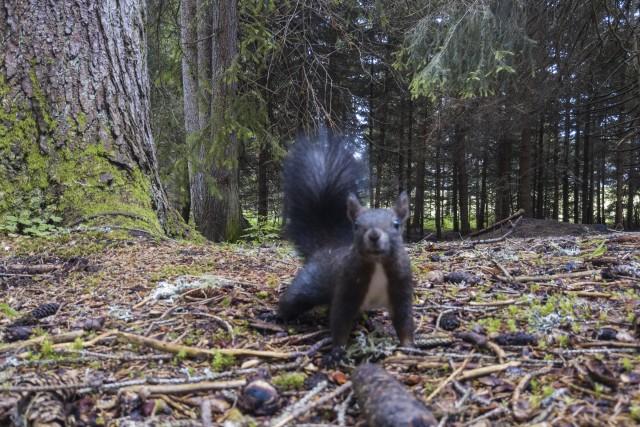 Un écureuil (Suisse)