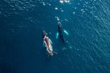 Humpack whales