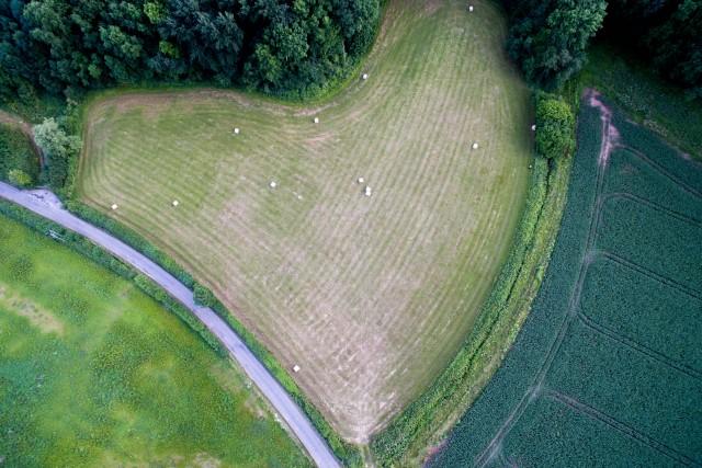 Field Heart