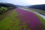 Flowers at Edersee