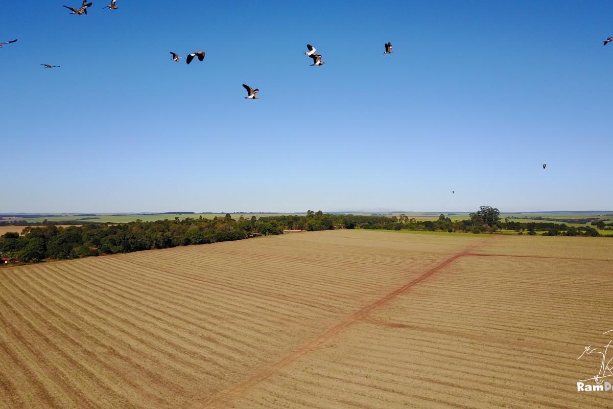 Birds / Pássaros voando