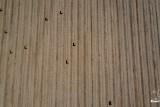 Bales of sugarcane straw on a plantation / Fardos de palhas em plantação de cana