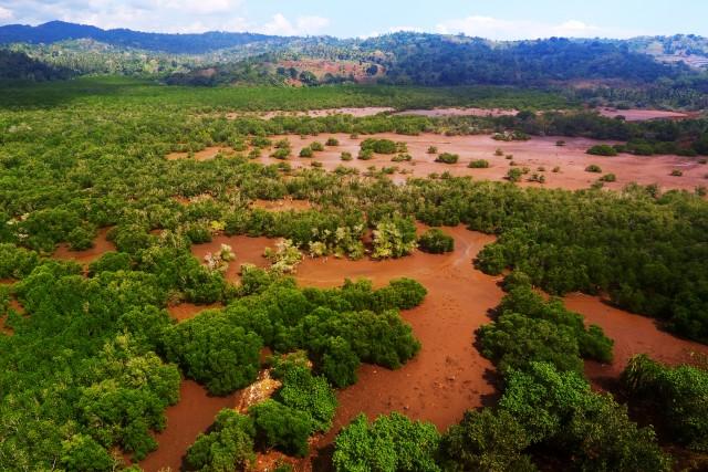 Mangrove, Mayotte