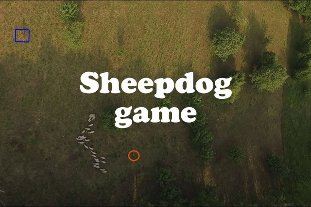 Sheepdog Game