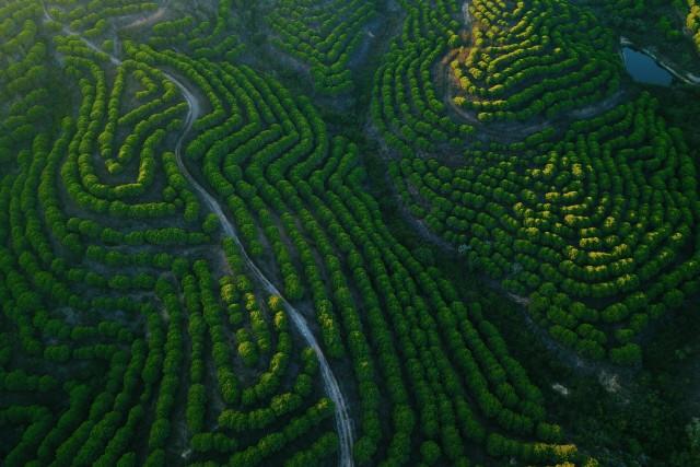 Tree Patterns in Aljezur