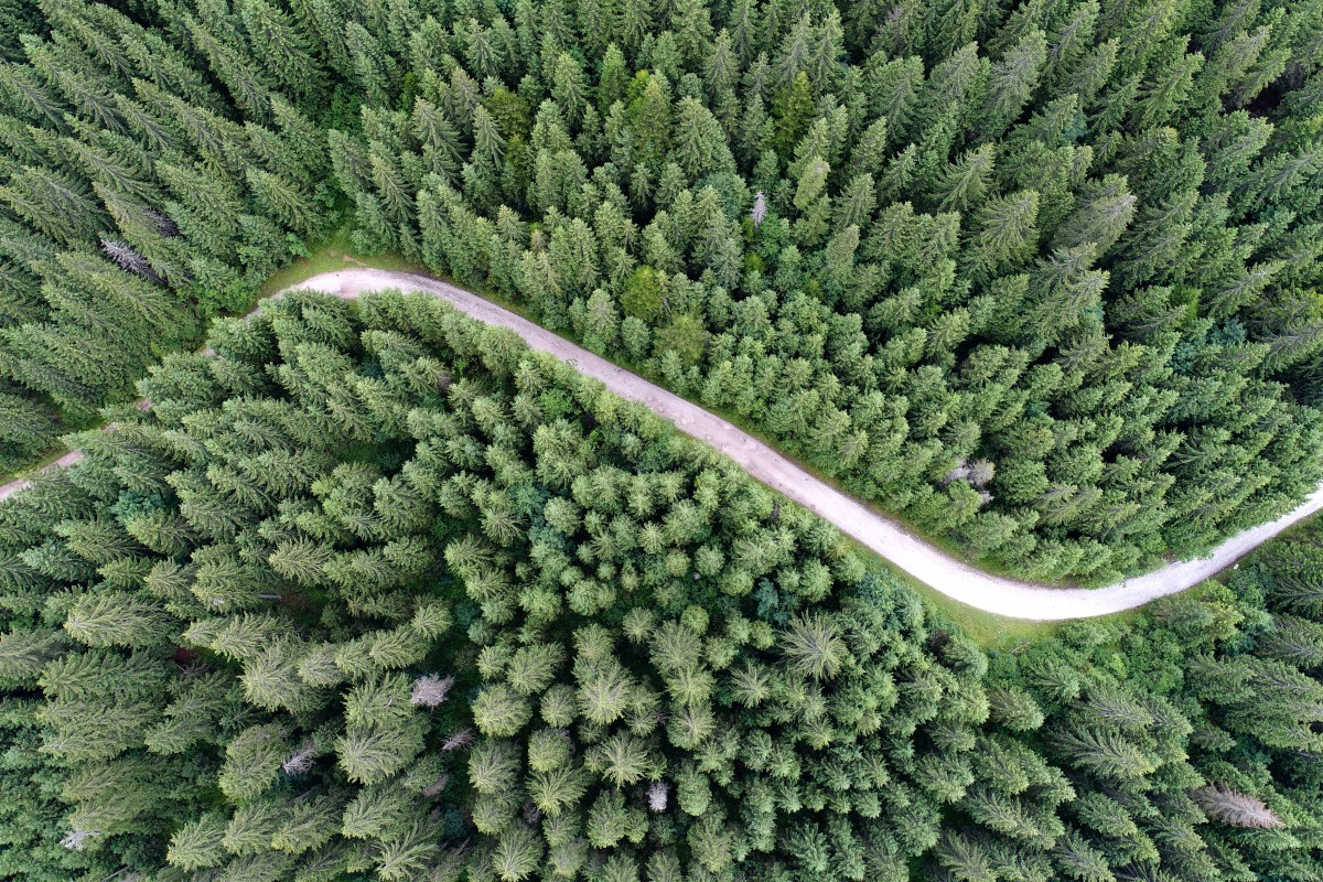 Above the forest