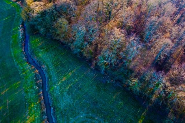Forêt, Vernoux, Bresse, France