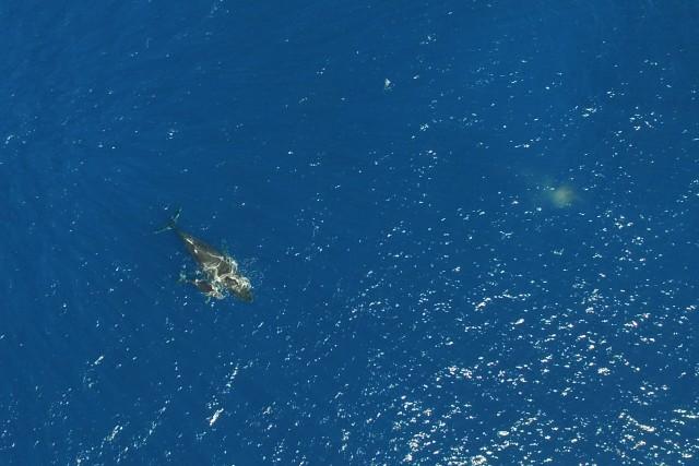 Baleine et baleineau – Mayotte