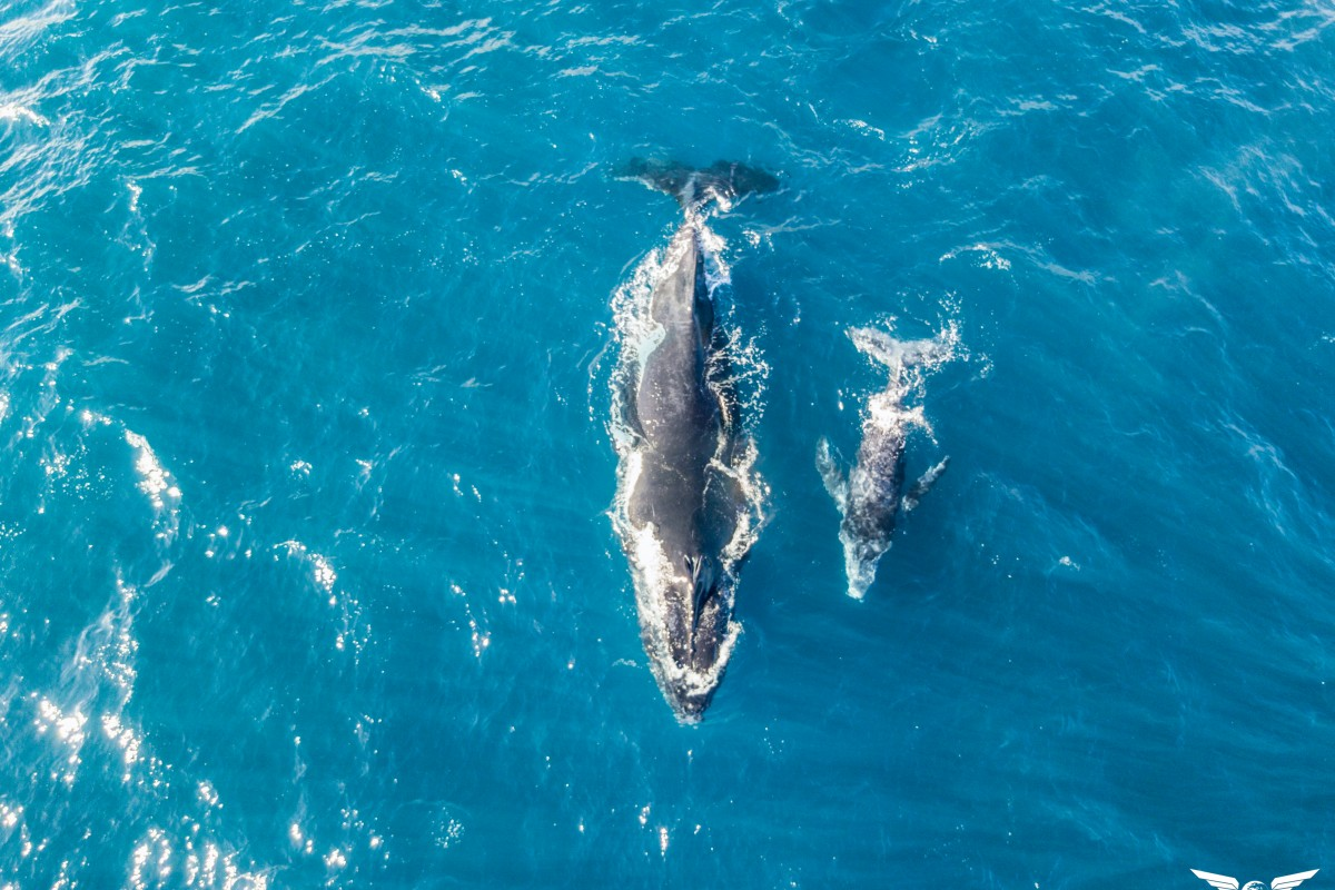 whales – Reunion Island