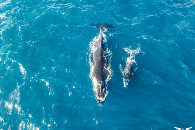whales – Reunion Island