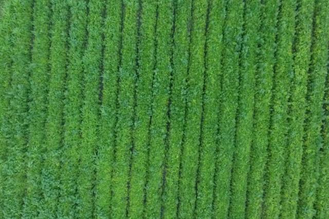 Aerizone- Crop monitoring