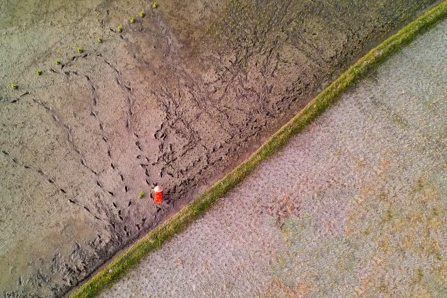 Orange Rice Farmer