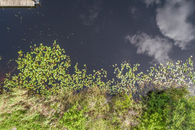 Everglades Swamp, Florida