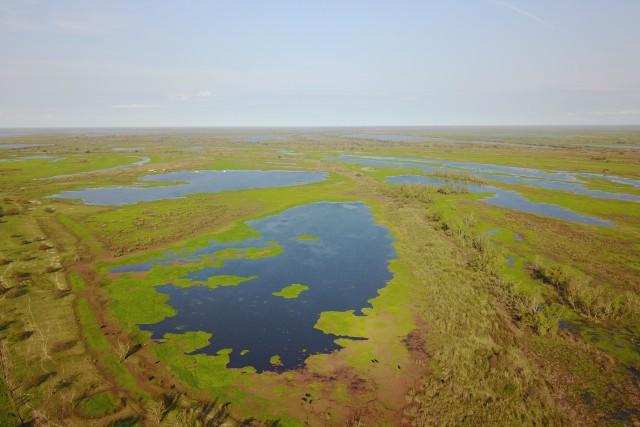 Los pantanos de Rosario