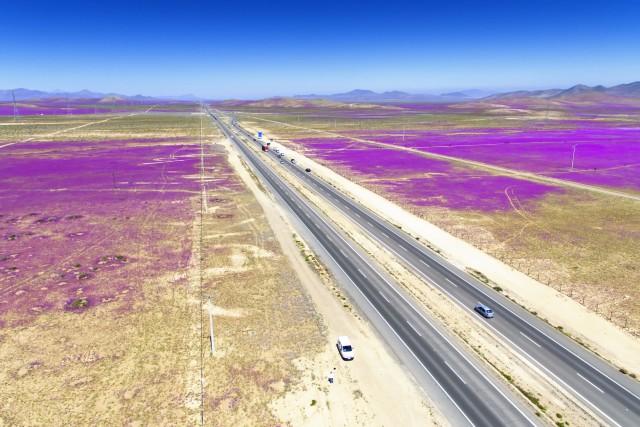 Desierto Florido