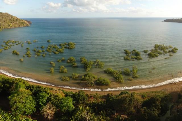 Mangrove de Mronabeja – Mayotte