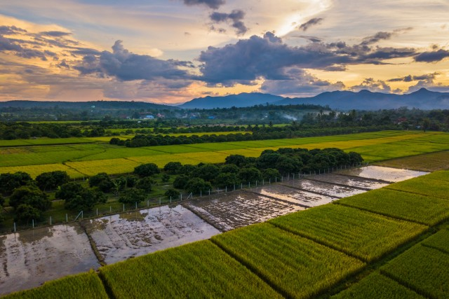 Rice Fields – Sunset – Chiang Mai – Northern Thailand
