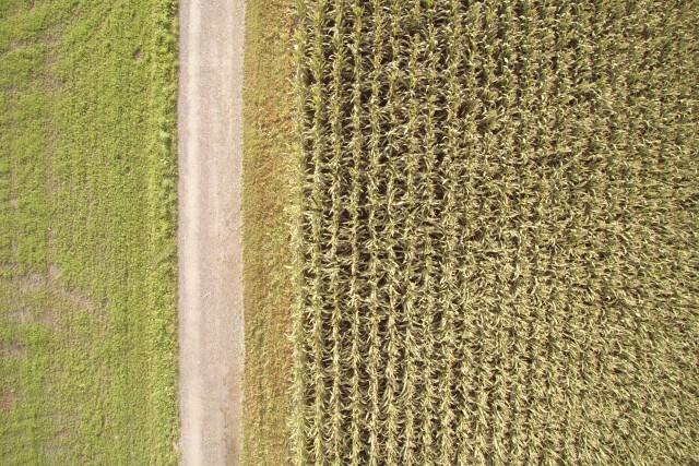 Green Nature of Fürstenau Switzerland