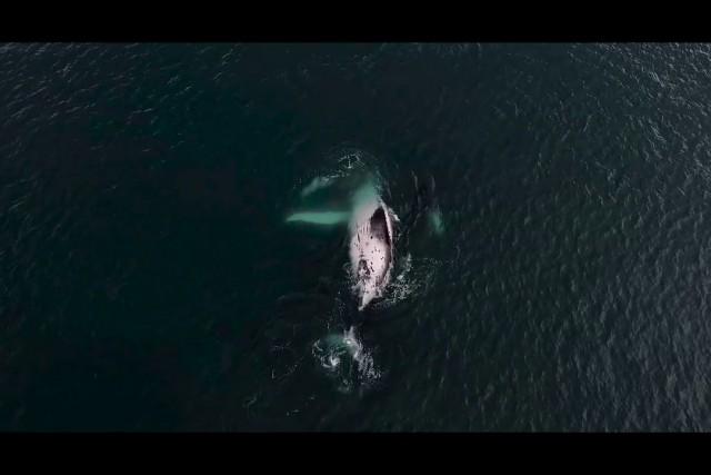 Ballenas y delfines. Whales and dolphins