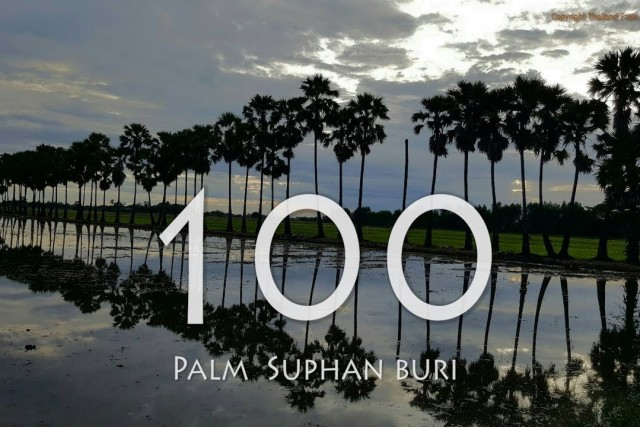 The 100 palm trees of Suphan Buri in thailand drone FPV 2.7k