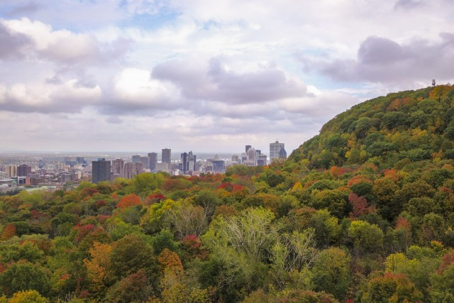 Montreal popping out from the forest