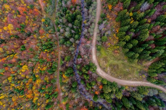 TriO of Autumn
