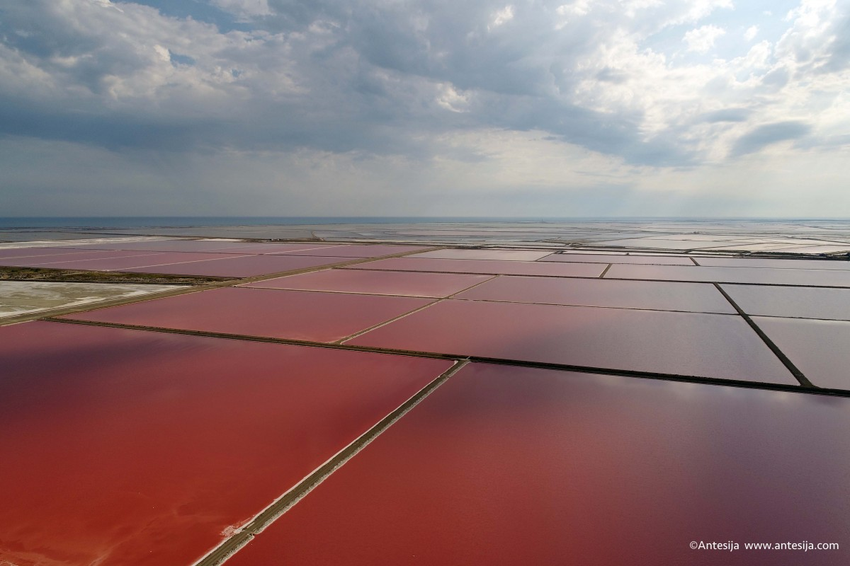 Red Salinas
