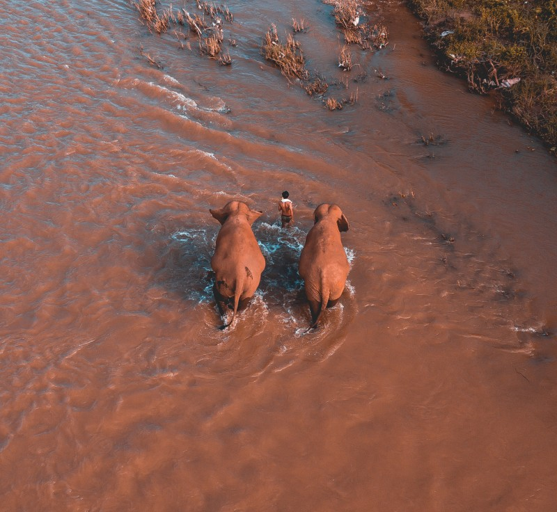 Elephants Walking River – Northern Thailand – Chiang Mai