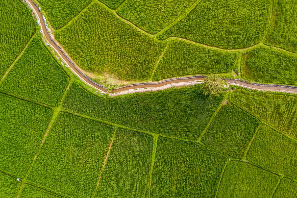 Rice Field Aerial – Canal Water – Thailand