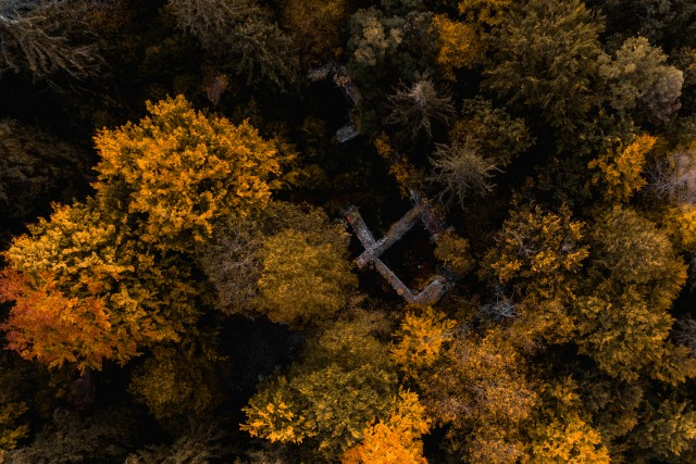 Ruins in autumn colored woods