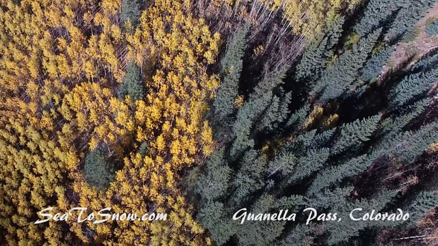 Aspen turning and fall foliage in Colorado Rockies