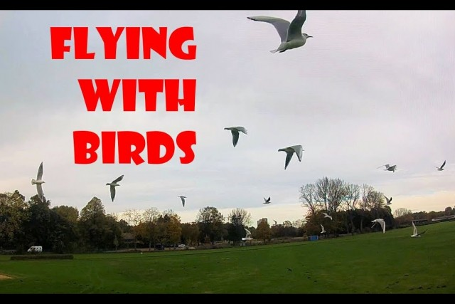 Dogs chasing me chasing birds