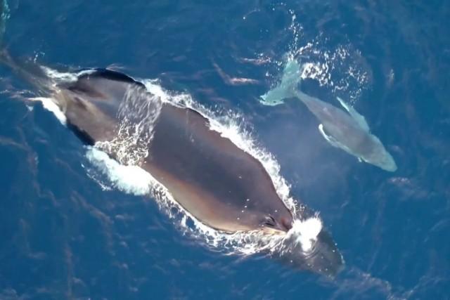 Le temps des Baleines 2017