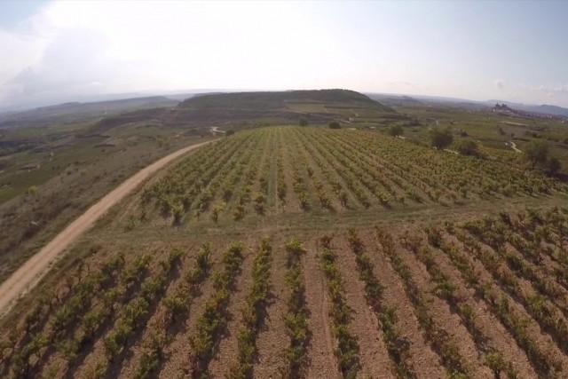 Macan, Bodega Rothschild & Vega Sicilia