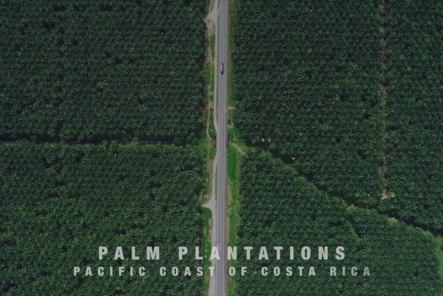 Palm plantations, Costa Rica