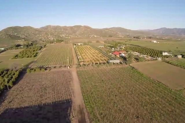 Vitivinicolas, Valle de Guagalupe, Mexico
